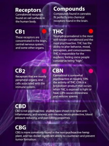 CBD Hemp Oil Benefits